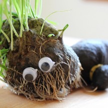 Science for Kids: DIY Chia Pet