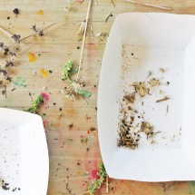 Science for Kids: Harvesting Seeds
