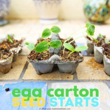Easy garden project for kids: starts seed in recycled egg cartons.