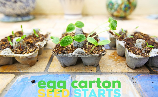 Garden Project for Kids: Seed Starts